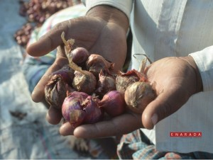 Farmers lose crops in Hubli, enarada.com