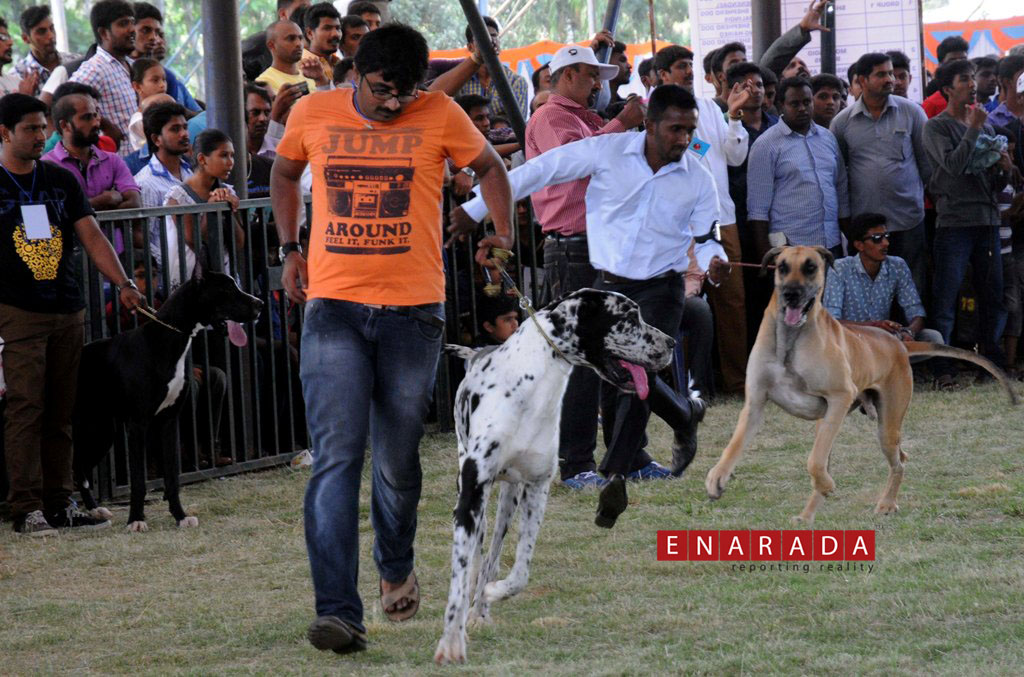 The show, organised by the Canine Club of Mysore (CCM) on Oct 25