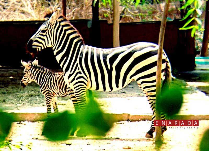 zoo mysuru