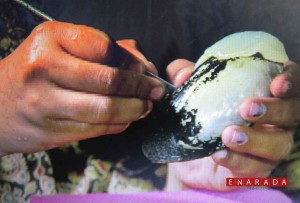 Fresh water pearl cultivation. eNarada Photo